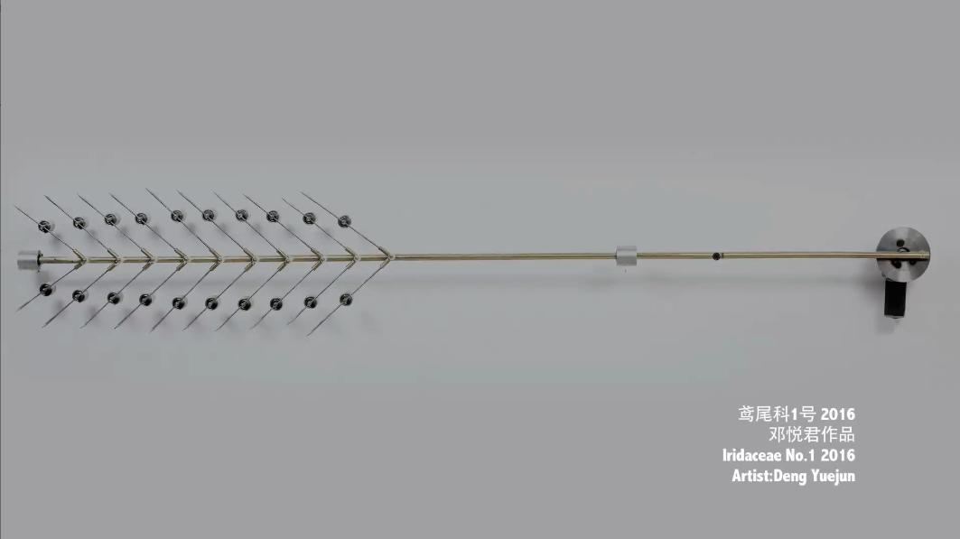 鸢尾科NO.1